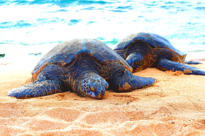Turtle Nap Time
